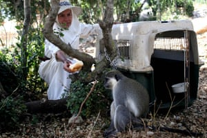 The monkey is fed after returning to its owner Beatrice Mauger in Al Qouzah, southern Lebanon
