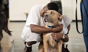 Best of buddies: Jason Mori has now left prison and has set up a successful dog training business called K9BreakThru.