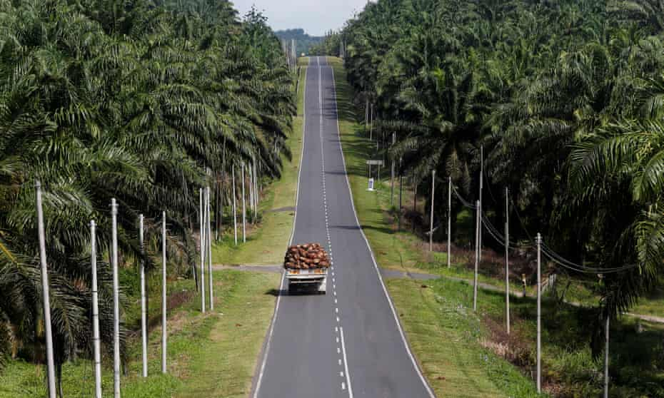 A truck carrying oil palm fruits passes through a plantation in Sabah, Malaysia.