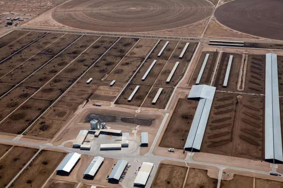A mega-dairy in Arizona