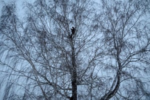Alexei Dudoladov, a student and popular blogger, climbs a birch tree for better cellular network coverage in the remote Siberian village of Stankevichi.