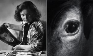 Jane Bown at Guildford school of Art and her photograph, Cow Eye, taken on Dartmoor both in 1947