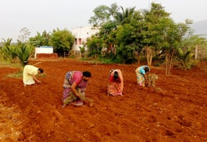 A group of women's collective farming