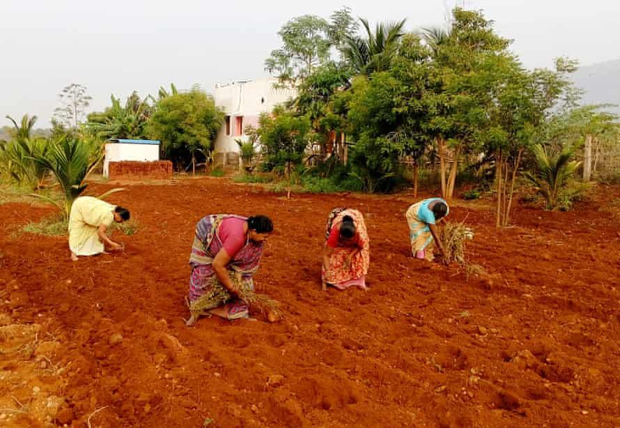 A Women's Collective farming group