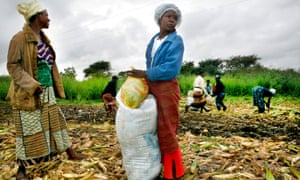 Josephine, left, and Brenda pack corn into bags on a farm on the outskirts of Lusaka, Zambia. In Zambia, 65% of farmers are women.