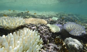 Corals bleaching at Loomis Reef, Lizard Island, during mass coral bleaching of 2016