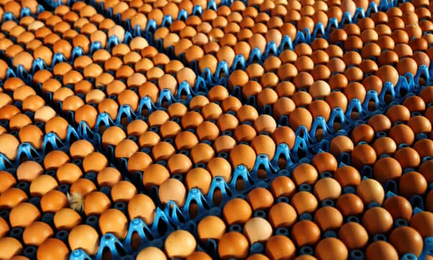 Eggs are packed to be sold at a poultry farm in Wortel near Antwerp, Belgium