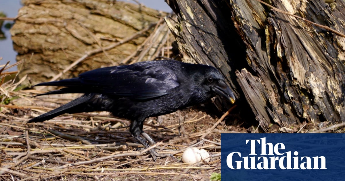 Crow And The Vernal Egg Environment The Guardian