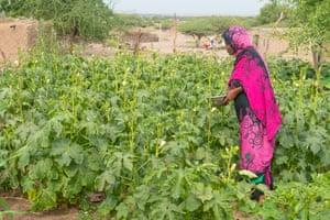 The 'women's garden' in Wad Hassan village