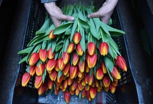 A florist sells tulips grown in a greenhouse complex in the Novosibirsk region
