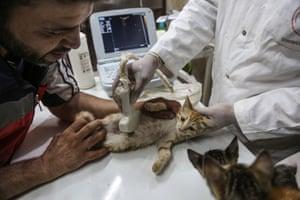 Aljaleel helps the vet Mohammad Youssef examine a cat
