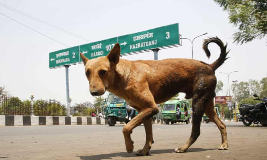 A stray dog walks on a road in Lucknow, Uttar Pradesh.