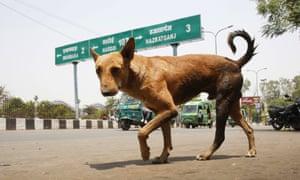 A feral dog in Lucknow, Uttar Pradesh