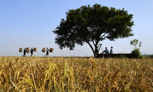Farmers on the outskirts of Guwahati, India