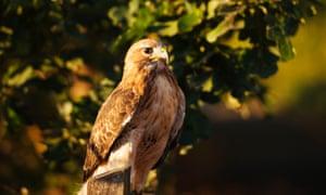 Coda Falconry Experience