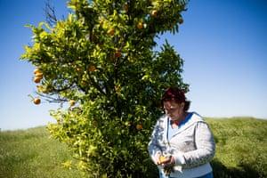Tammi Riedl checks on oranges on her farm.