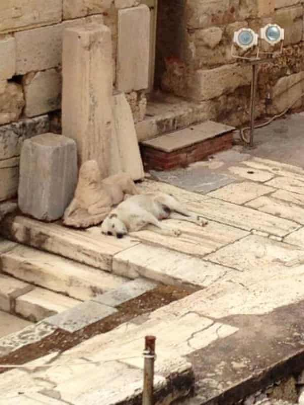 Photo posted by Dogspotting member Tobias Brockie of a spot at the Acropolis in Athens, Greece, that made the Top Spots of 2014.