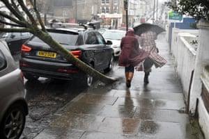 A fallen tree in Battersea, London