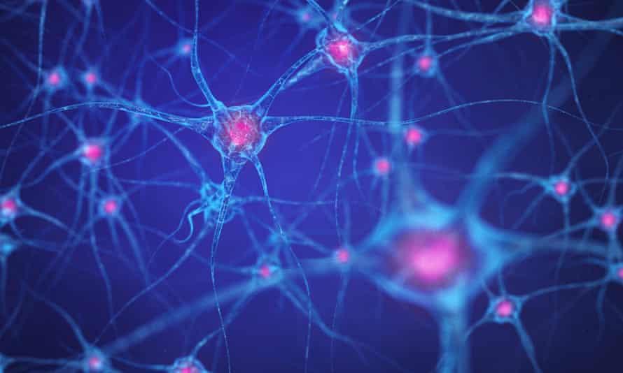 Neural network , Brain cells , Human nervous systemF5R8W6 Neural network , Brain cells , Human nervous system