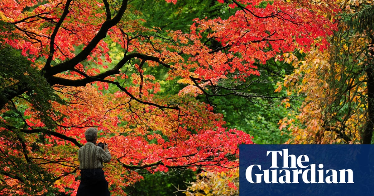 Hopes of autumn glory as season arrives early in parts of southern England