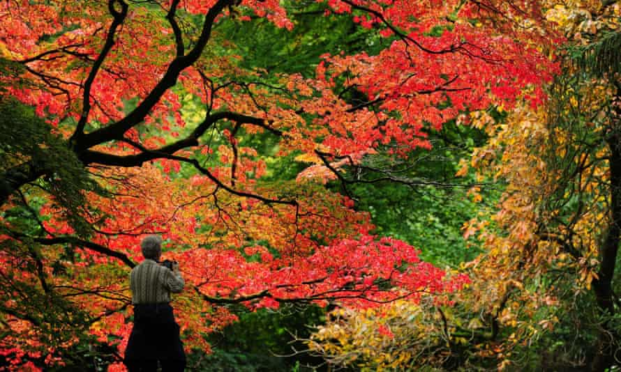 A visitor enjoys a previous autumn's colours at Westonbirt arboretum in Gloucestershire
