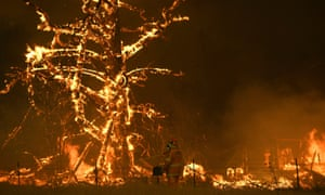A tree burns during the New South Wales bushfires