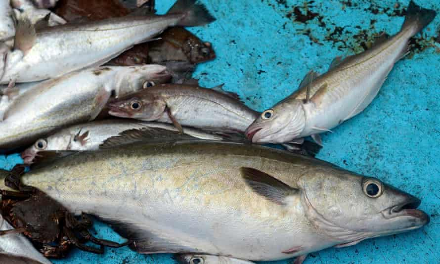 Fish from the North Sea