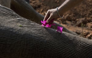 Flowers on dead elephant