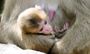 Baby monkey Charlotte