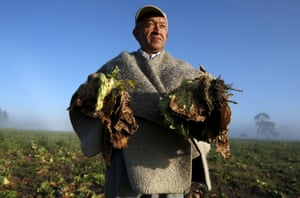 Farmer Carlos Lopez shows lettuce crops that were damaged by lack of rain linked to the El Niño weather phenomenon, in the municipality of Madrid near Bogotá, Colombia