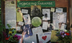 Tributes to Harambe after the gorilla was shot.