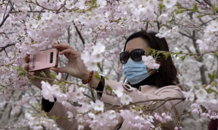 A woman takes photos of cherry blossom in Yuyuantan park in Beijing, China, in March.