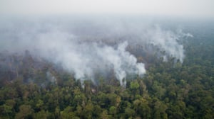 An aerial view of a burnt peatland forest in Ketapang district, West Kalimantan.