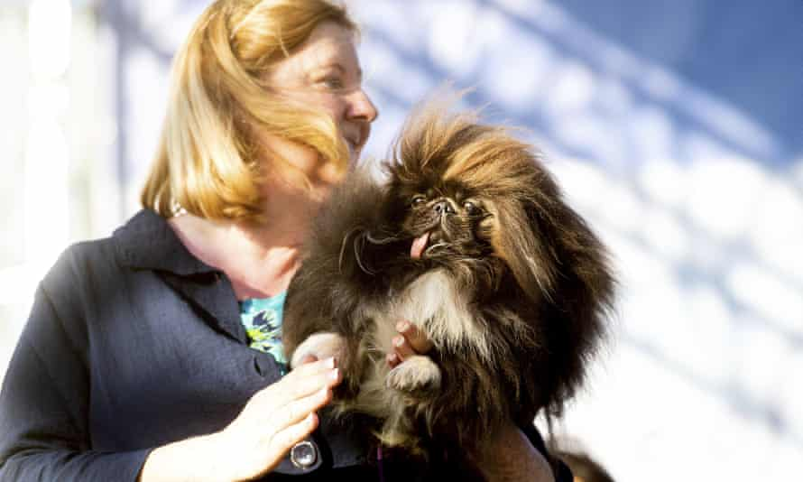 Wild Thang, a three-year-old Pekingese, competes with owner Ann Lewis.