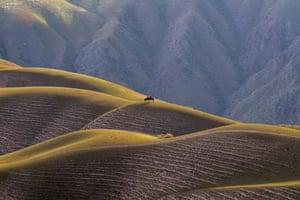 Xinjiang, China Horsemen on the Kalajun grassland, in Tekes county