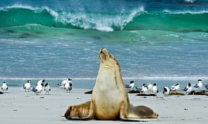 Seal Bay on Kangaroo Island suffered no damage during the devastating bushfires that swept the island in late December.