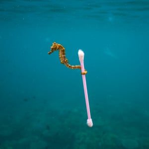 Justin Hofman's image of a seahorse swimming with a discarded cotton bud illustrates the issues of plastic pollution in our oceans.