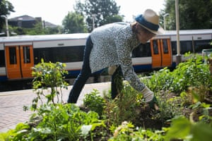 Shelagh Molloy, a local resident, helps out with the watering and weeding at the Energy Garden at Brondesbury Park Station.