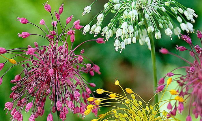 Ornamental Bulbs That Are Good Enough To Eat Life And Style