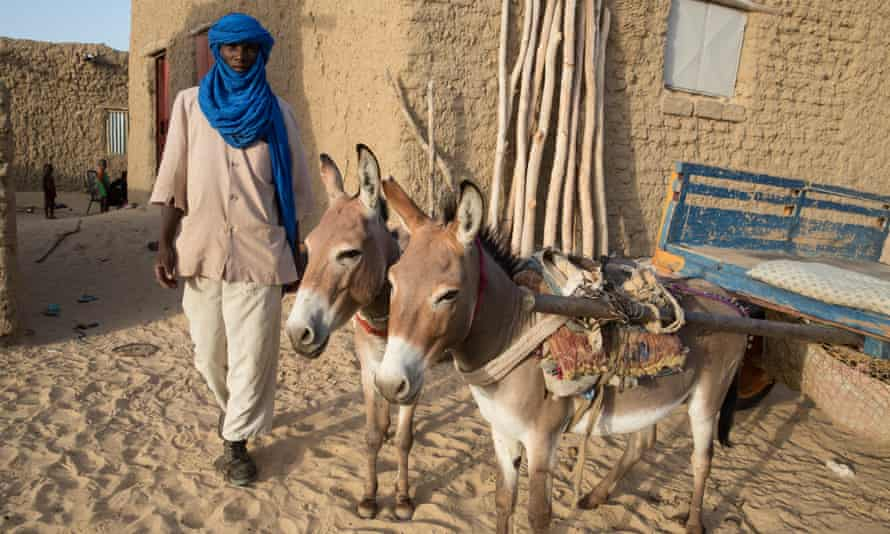 In Timbuktu rubbish collector and general 'white van' man Alsion depends on his donkeys for his livelihood