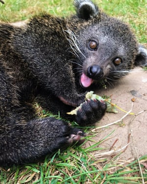 Runner-up, In the Moment - People's Choice category: Mischievous kit, by Leanne Aldred at Wingham Wildlife Park Species: Binturong