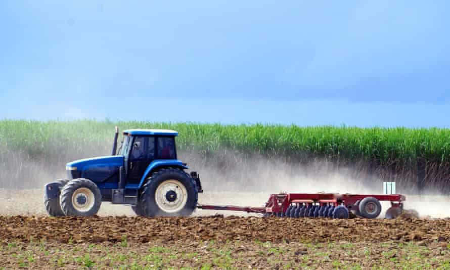 A sugar cane farm in Queensland, Australia.