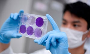 A researcher in a mask and gloves  holding up a tray of what appear to be viral cultures.