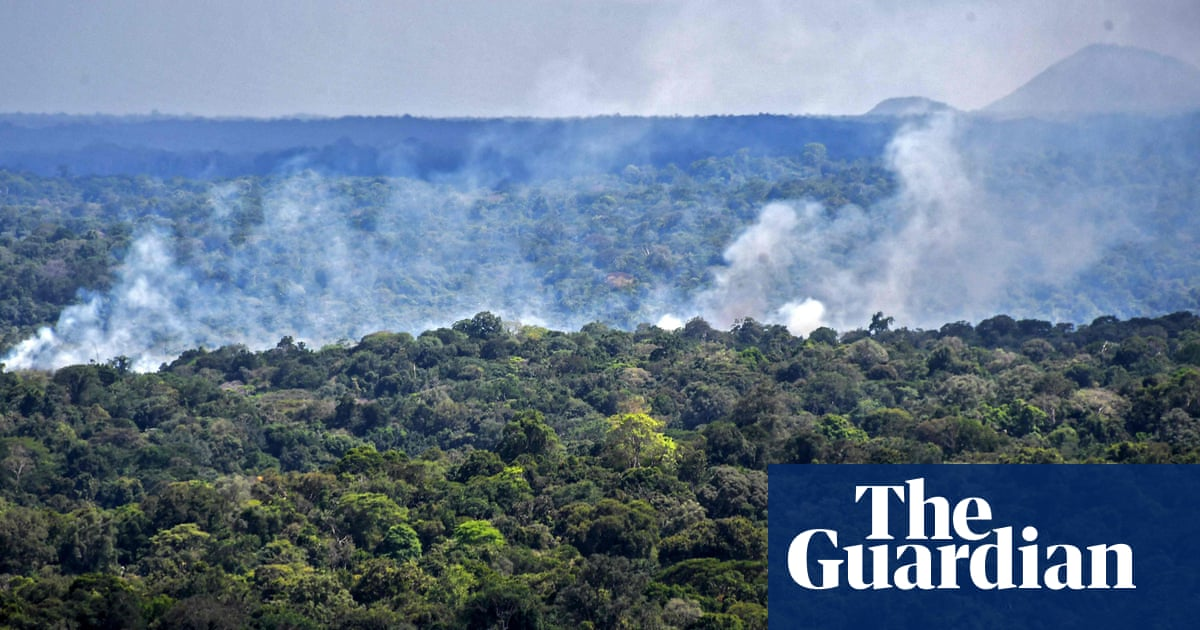Destruction of world's forests increased sharply in 2020
