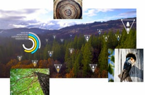 Image of trees with data and insights courtesy of Microsoft AI