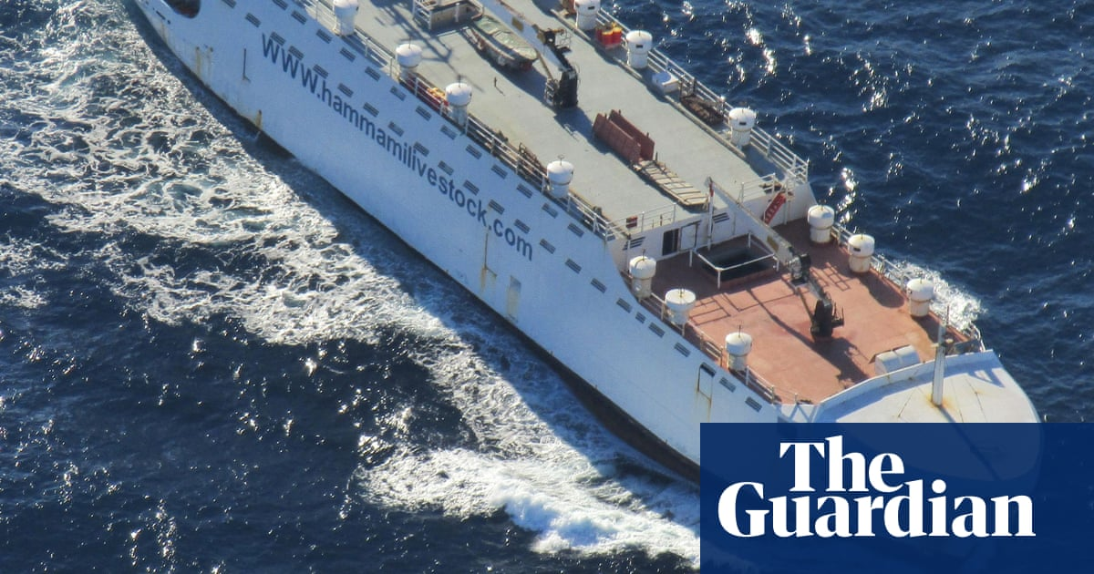 Live animal exports are being used as cover by smugglers, say NGOs