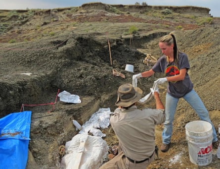 Robert DePalma and field assistant Kylie Ruble excavate fossil carcasses from the Tanis deposit.