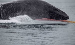 Humpback whale lands on kayak of Tom Mustill and Charlotte Kinloch