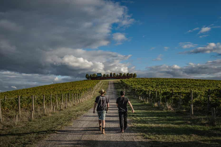 Bandesh is taken by a farmer through Denton View Hill vineyard.