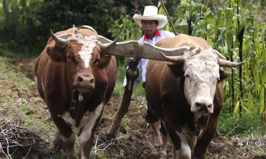 The Free Peru party presidential candidate, Pedro Castillo, guides the plough on his property in Chugur, Peru.